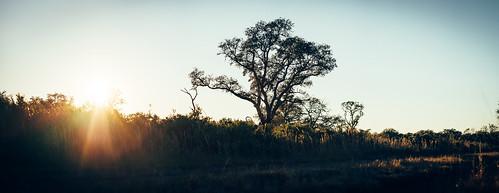 sonyalpha a7s sarasota myakka myakkastatepark sun lensflare sunset tree winter winterinflorida sonya7s vsco bokehpanorama panorama nikkor85mm cinematic colorgrade nature landscape anamorphic srqphotographer