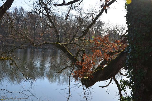 La branche du lac