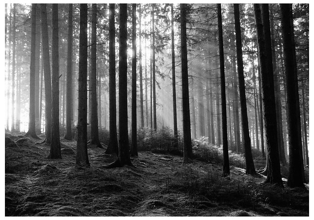 Darkroom Print: Skovstemning