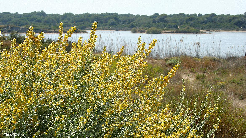 lago de la Dehesa del Saler
