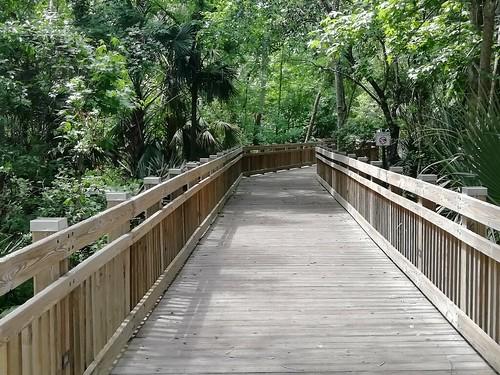 On the boardwalk. No gators .