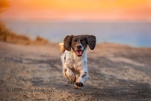 Running | by Flemming Andersen