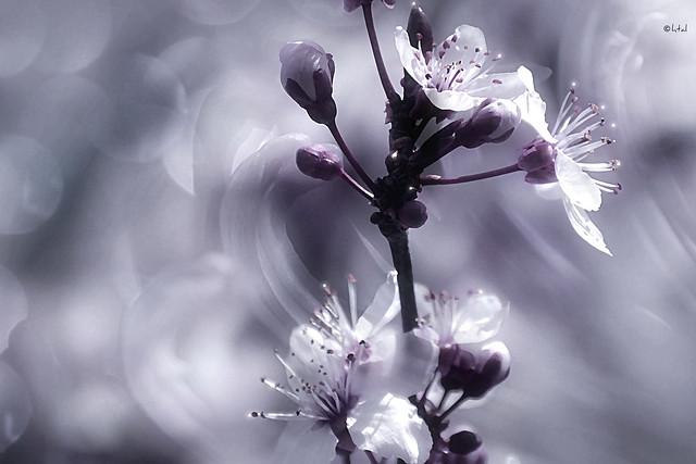 Bokeh in Flora