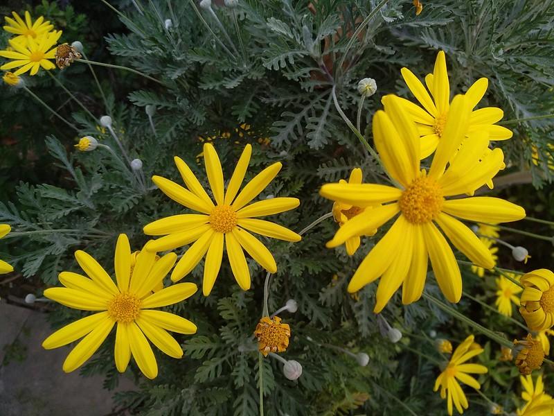 Обои Flowers, Yellow flowers, Жёлтые цветочки картинки на рабочий стол, раздел цветы - скачать