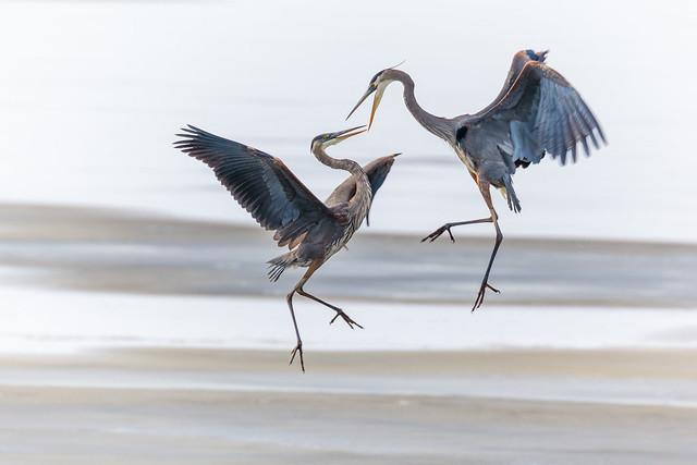Heron combat