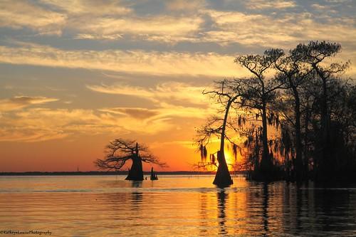 canon kathrynlouise florida seascape landscape waterscape reflection cypresstrees sunrise stjohnsriver lakemonroe enterprise gratefuldeadlyrics roberthunterlyrics