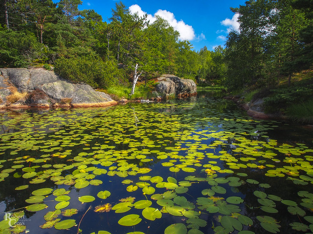 A Norwegian Lily Pond