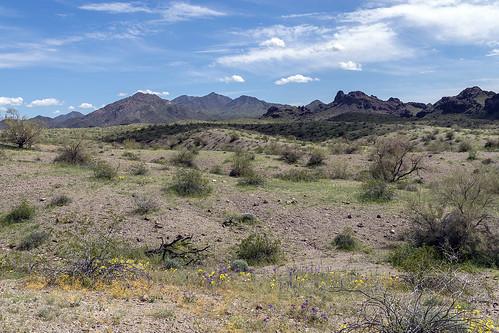 mohavedesert mohavemountains arizona wildflowers desert springtime