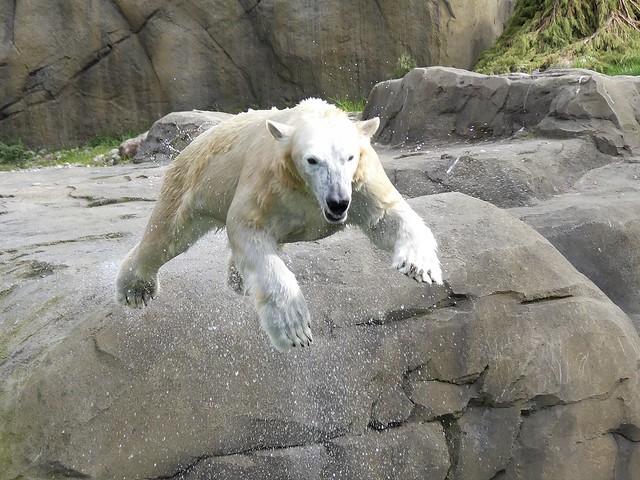 Noria. Zoo Rostock