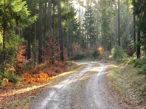 outdoor nature wald forest thuringia thüringen landscape landschaft