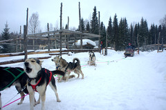 Safari de huskies