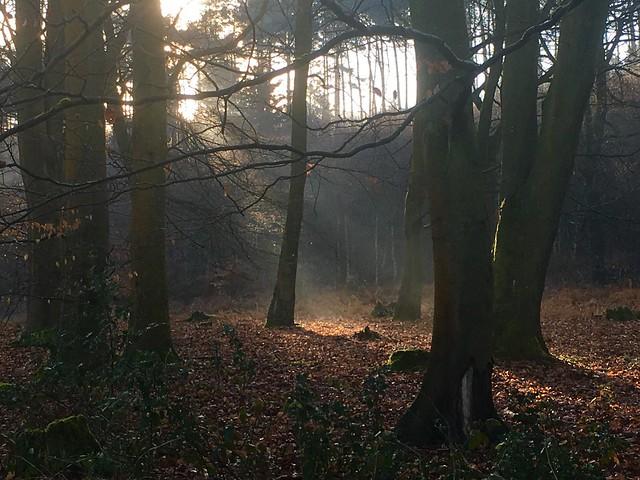Walking the Pilgrim's Way, Winchester to Canterbury