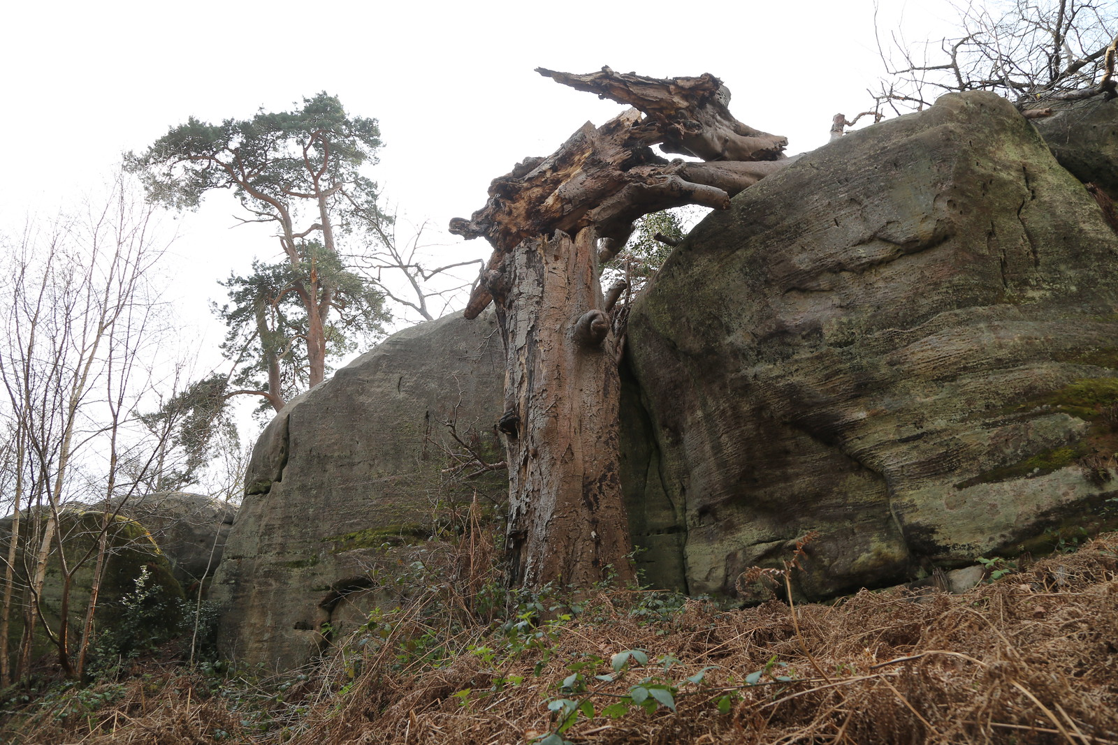 Trees and Eridge Rocks