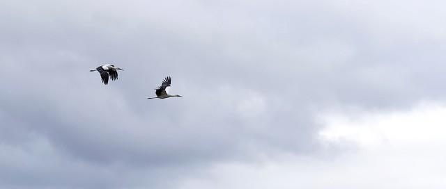 Storks on Christmas