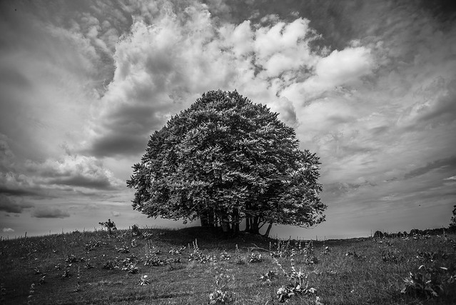 Summer Tree