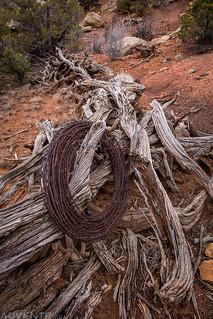 Old Fence | by IntrepidXJ