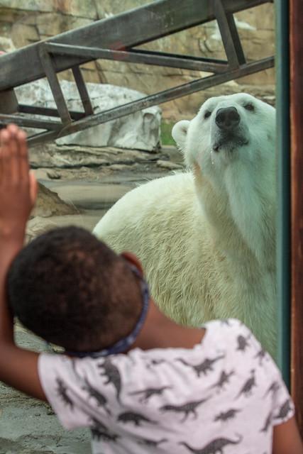 Boy and Bear, Louisville Zoo