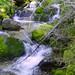 Ingals Creek