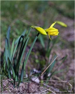 C'est le printemps ! | by Alain Olivier