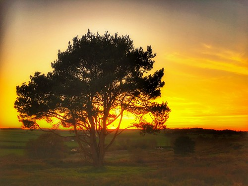 Tree on fire , Gentleshaw Common, England | by cattan2011