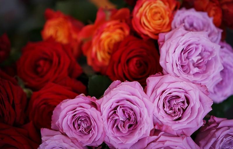 Обои розы, бутоны, много картинки на рабочий стол, раздел цветы - скачать