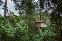 Ginigathena tree house