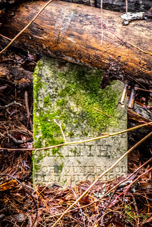 Tall Pines Preserve and South Saluda Church Cemetery-37 | by RandomConnections