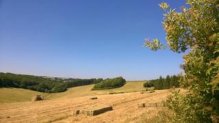 Summer's Hay | by noluck