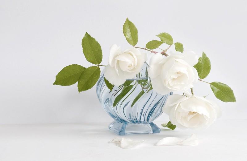 Обои белый, розы, ваза картинки на рабочий стол, раздел цветы - скачать