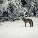 Backyard Low Snow 10-01 AM by Barking Dog Photos_Bruce Gregory