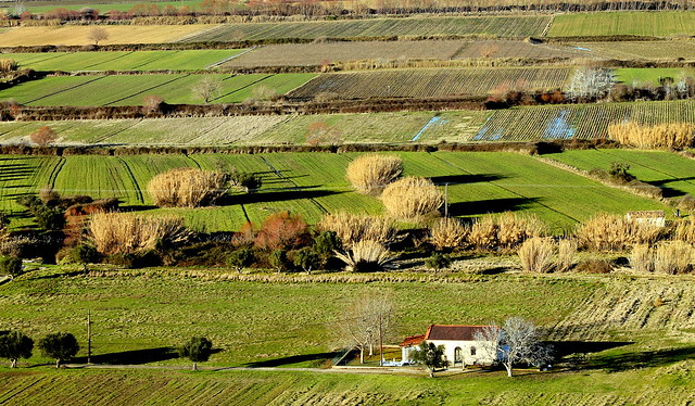 Bird view of countryside