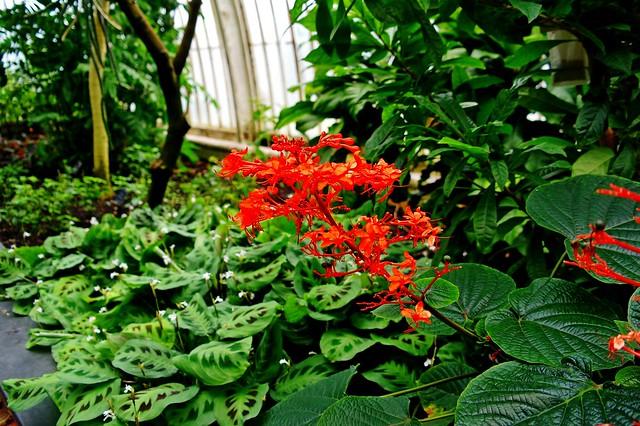2013-07-03 Londyn - Kew Gardens (35)
