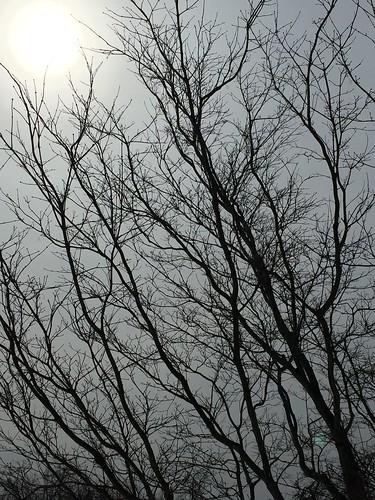 landscape tree sun light nature hiam
