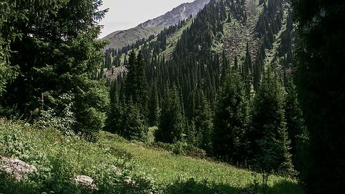Almaty Pines