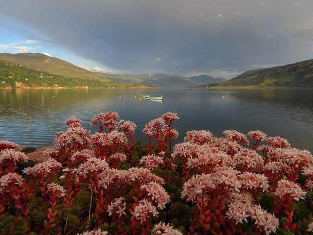 Les fleurs d'Ullapool, Ross and Cromarty, Ecosse, Grande-Bretagne, Royaume-Uni.