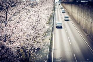 DSC02594 | by border.garaku