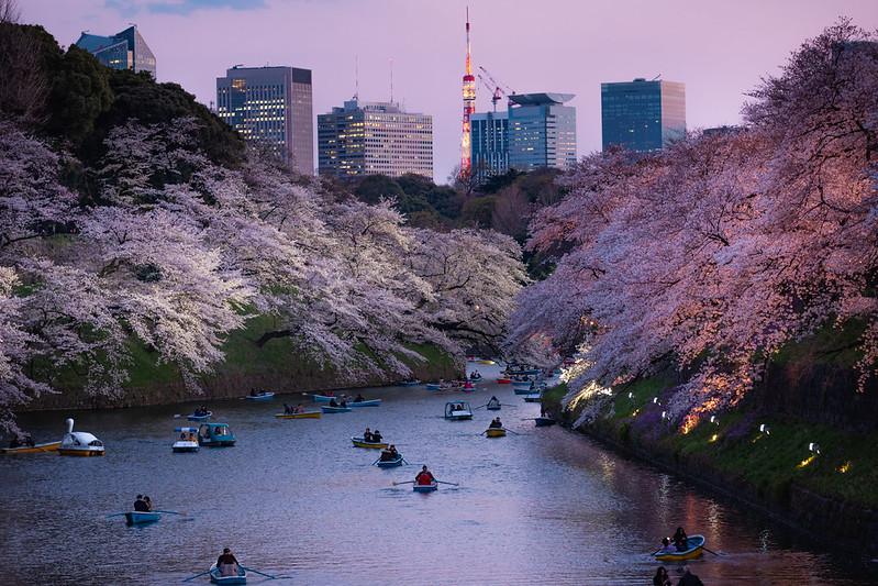 千鳥之淵|東京 Toyko