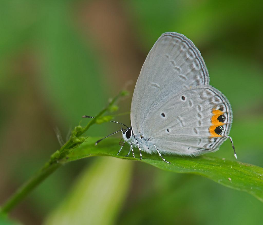 Indian Cupid   Flickr - Photo Sharing!