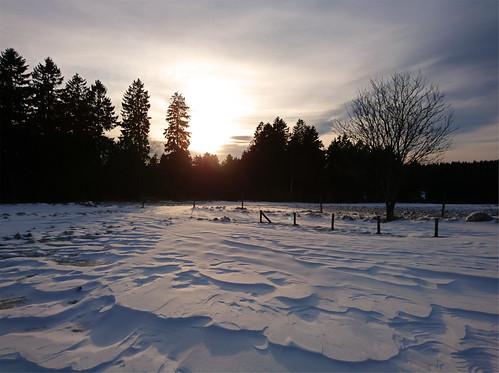 schnee snow eis ice bäume wald trees forest sun sundown sunset sunlight sturm zaun fence harz oberharz clausthal wolken clouds sky