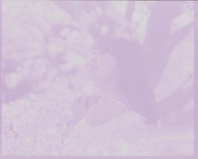Cherry blossom film