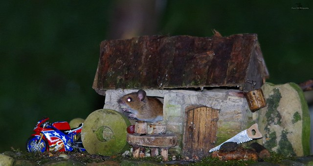 wood mouse and little house with motorcycle (1)