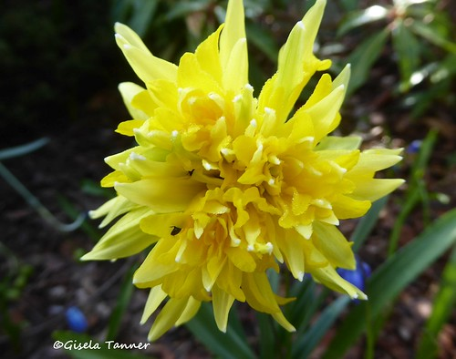 Grüße aus dem Aprilgarten ...