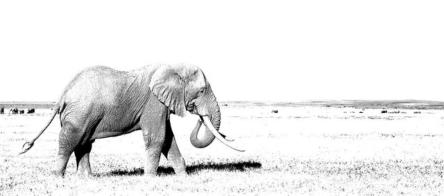 High Key Elephant