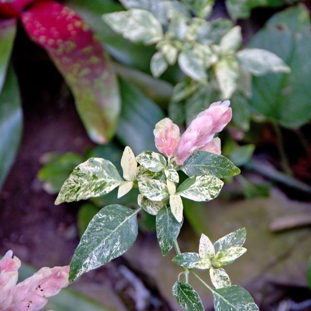 Celebrate Life: Springtime - Lamberton Conservatory Highland Botanical Park - Rochester NY