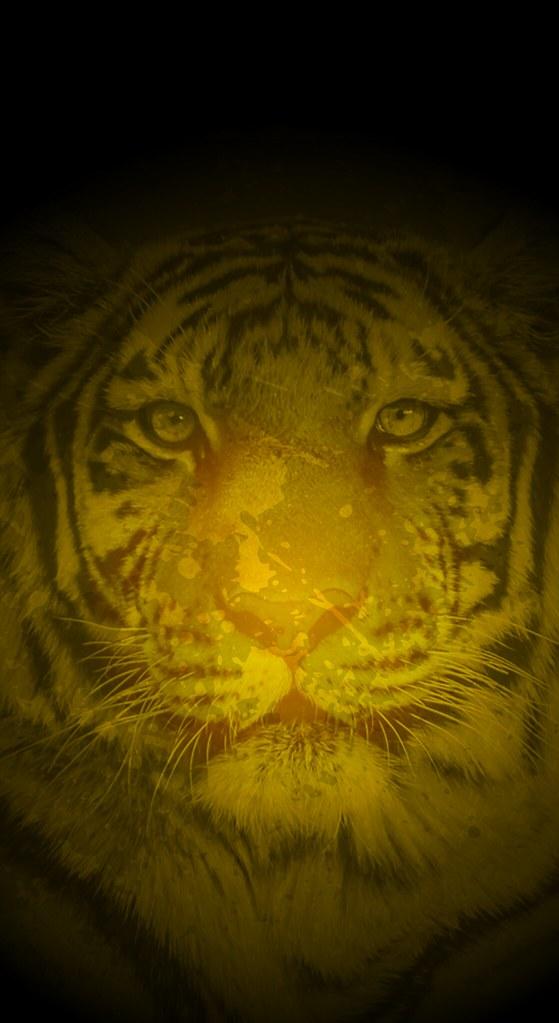 Richmond Tigers iPhone X Wallpaper (Gold) | Splash this wall