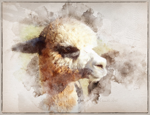 alpaca sevenstyles mixedmedia tier tiere animal animals outdoor fur furry fell textures texturen texture textur watercolor watercolour wasserfarben fauna tanglinlodge tennyson newsouthwales australia photoborder
