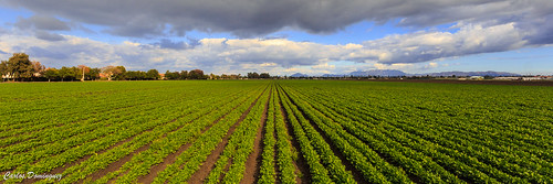 oxnard california unitedstates us field lines crops wide angle wideangle southerncalifornia clouds landscape green rows photography canonef1740mmf4lusm canoneos6d agriculture
