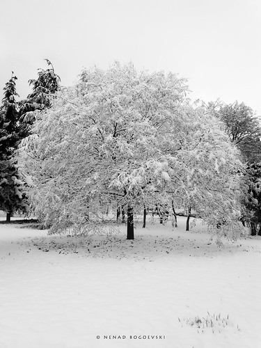 white winter snow view park trees skopje aerodrom macedonia снег аеродром македонија