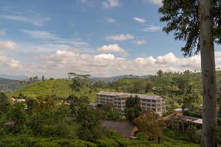 Tea Factory   by seghal1