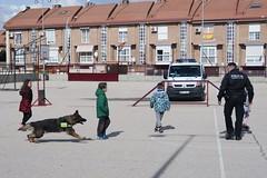 Exhibición de los perros de las Unidades Caninas de la Policía Local de #Arganda y otros pueblos del sureste.